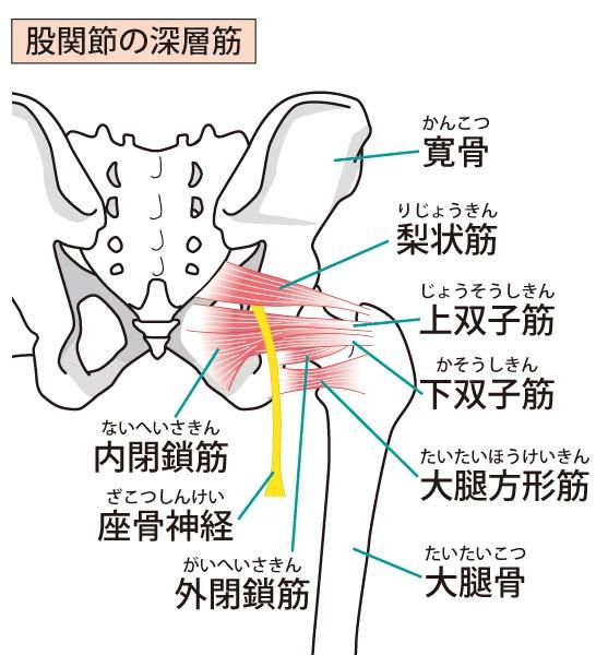 坐骨神経の位置