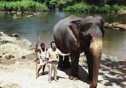 スリランカにて象と